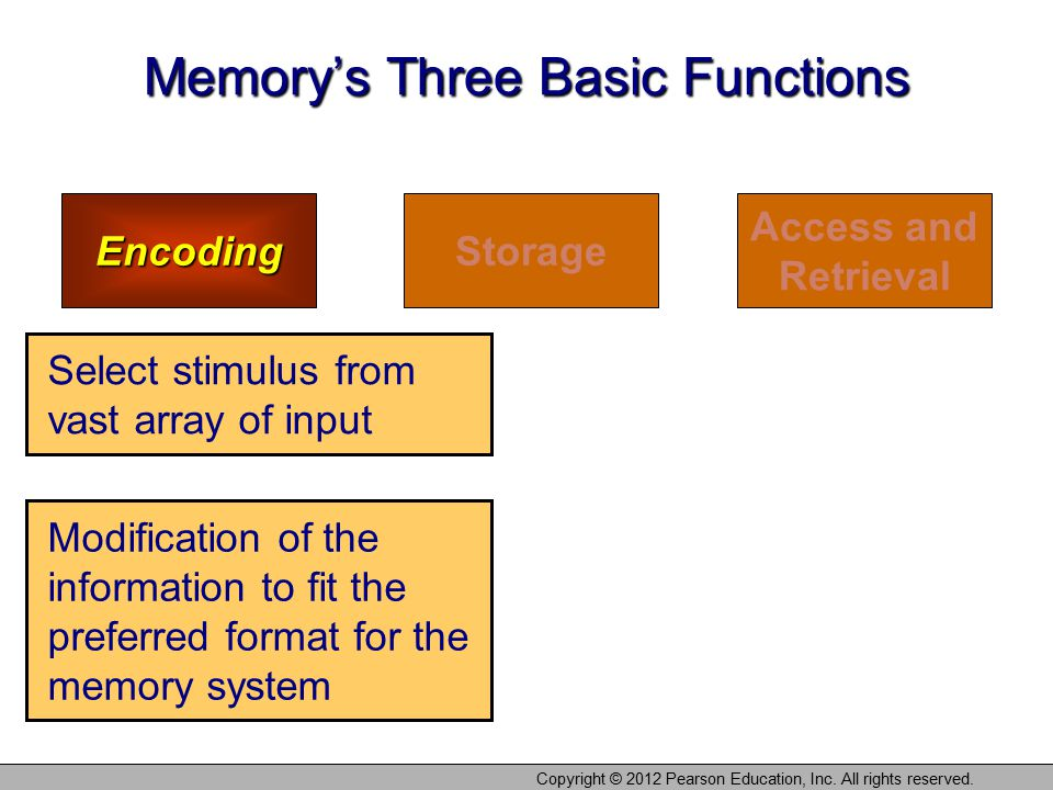 Memory's Three Basic Functions