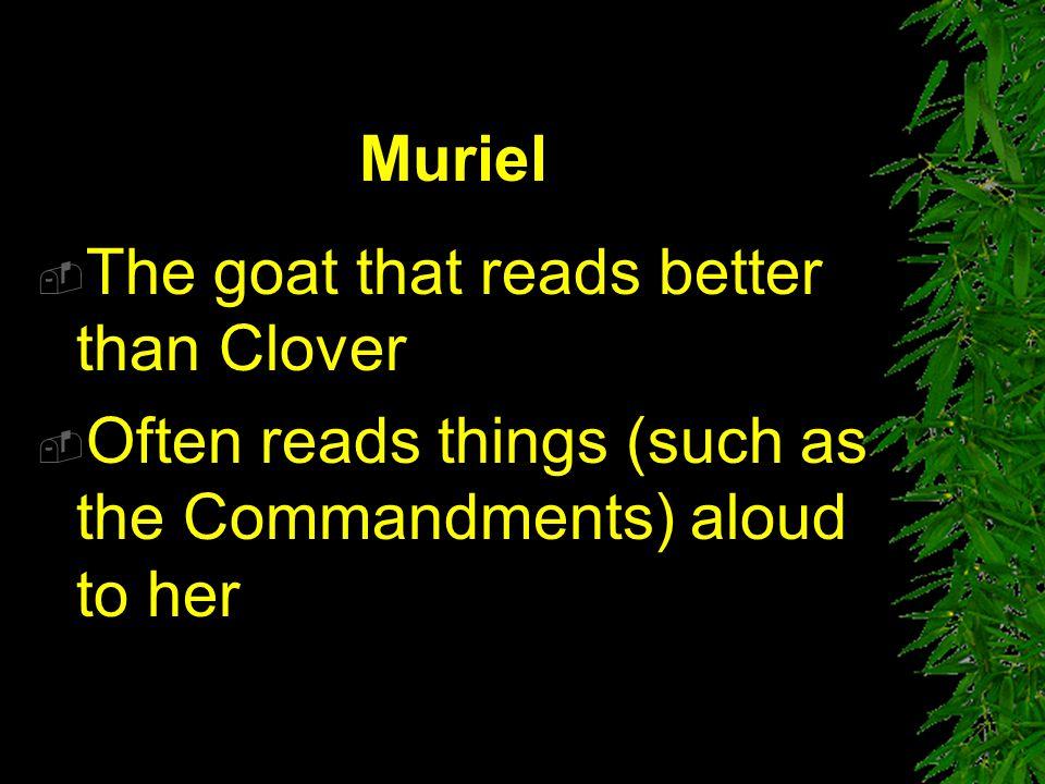 Muriel The goat that reads better than Clover.