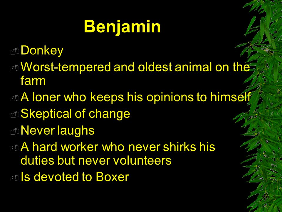 Benjamin Donkey Worst-tempered and oldest animal on the farm