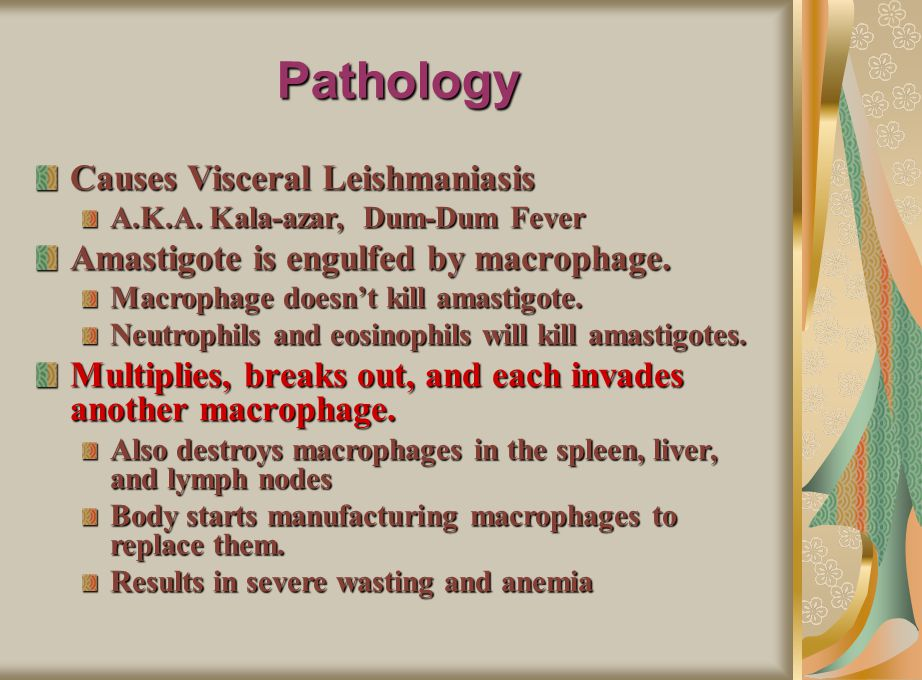 Pathology Causes Visceral Leishmaniasis