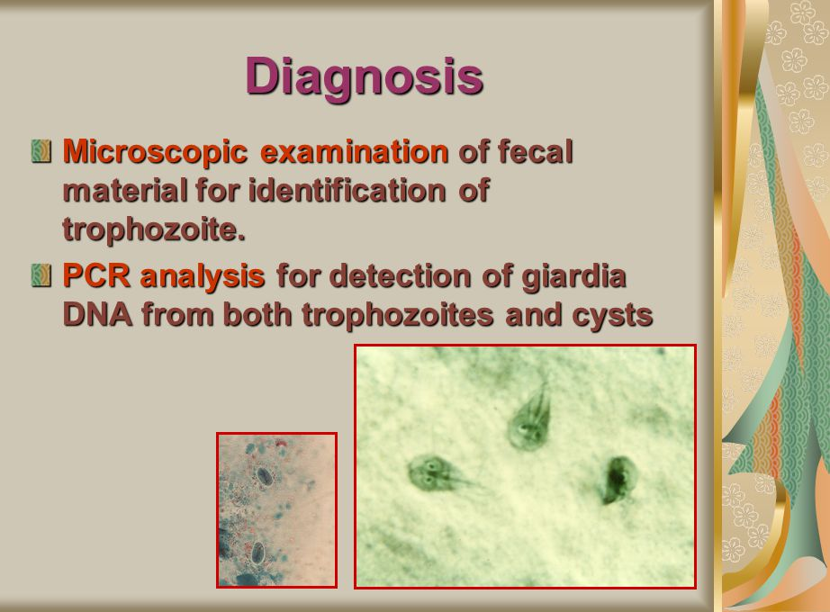 Diagnosis Microscopic examination of fecal material for identification of trophozoite.