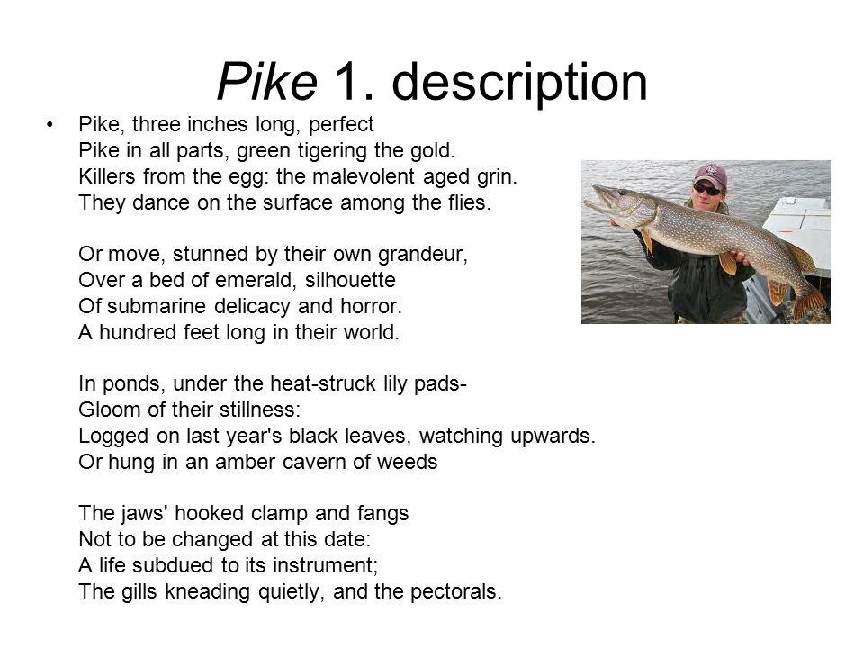 Pike 1. description