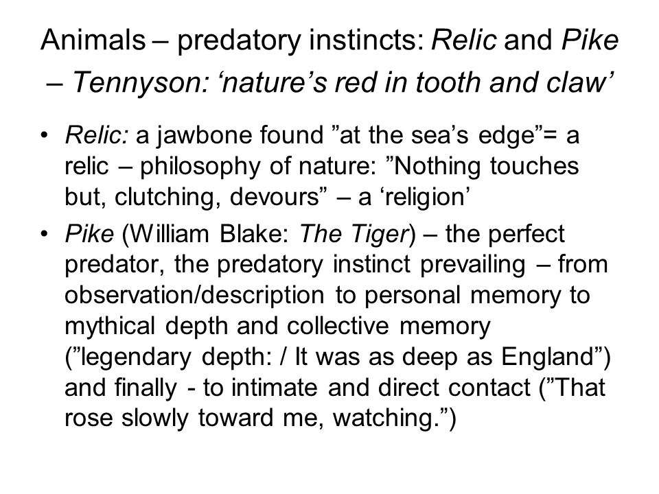 Animals – predatory instincts: Relic and Pike – Tennyson: 'nature's red in tooth and claw'