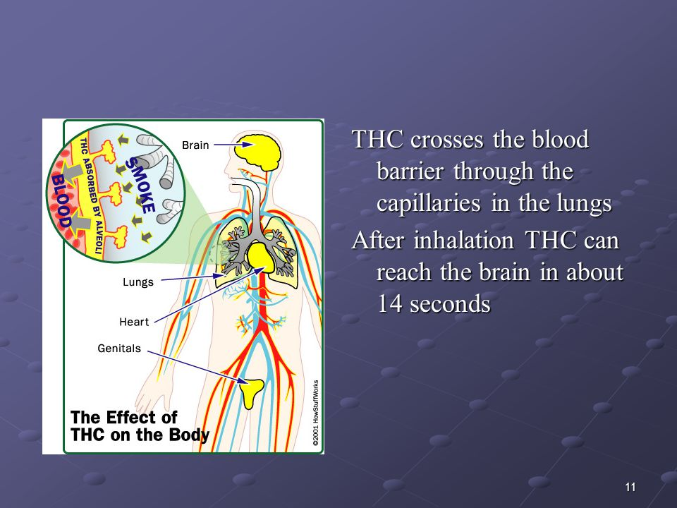 THC crosses the blood barrier through the capillaries in the lungs