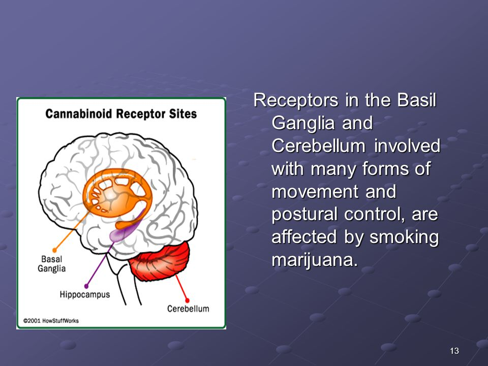 Receptors in the Basil Ganglia and Cerebellum involved with many forms of movement and postural control, are affected by smoking marijuana.