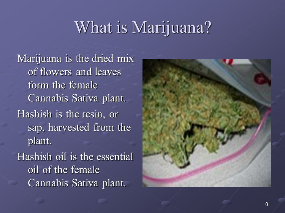 What is Marijuana Marijuana is the dried mix of flowers and leaves form the female Cannabis Sativa plant.