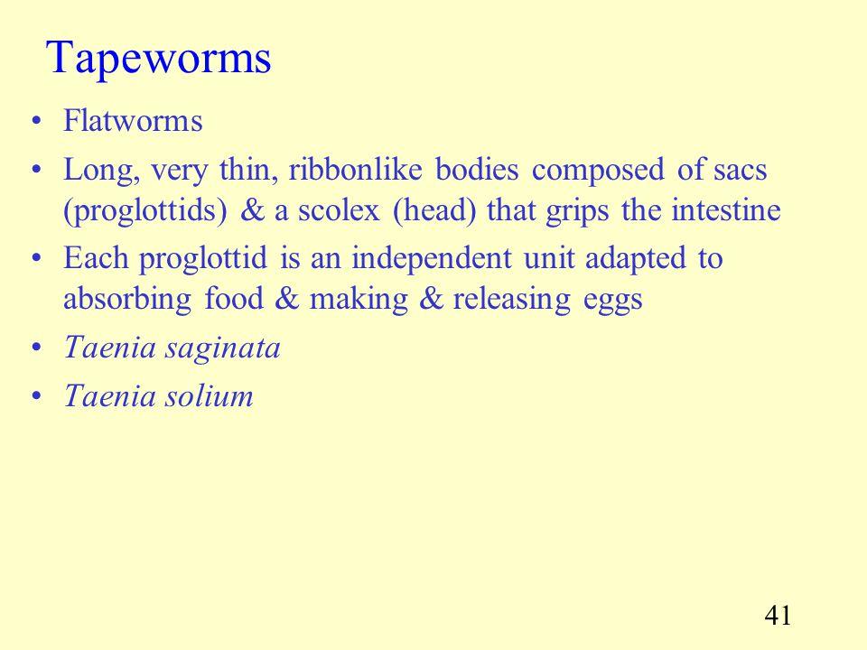 Tapeworms Flatworms. Long, very thin, ribbonlike bodies composed of sacs (proglottids) & a scolex (head) that grips the intestine.