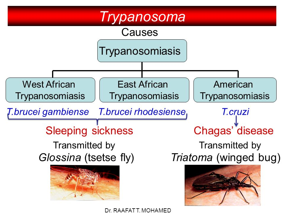 african trypanosomiasis African trypanosomiasis an often fatal disease of africa caused by trypanosoma gambiense or t rhodesiense and involving the central nervous system the parasites are transmitted to human.