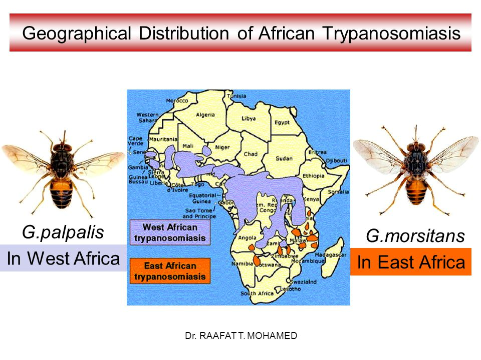 Geographical Distribution of African Trypanosomiasis