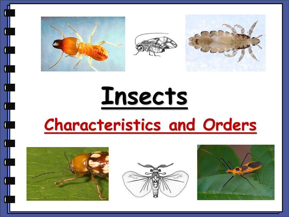 Characteristics and Orders