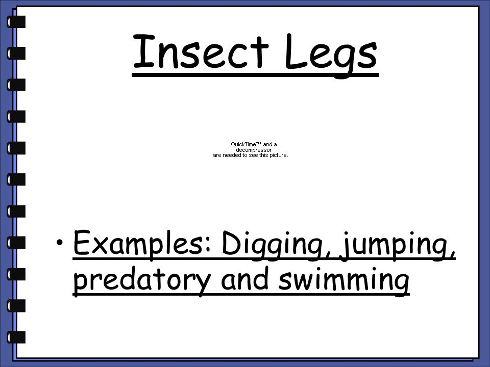 Insect Legs Examples: Digging, jumping, predatory and swimming
