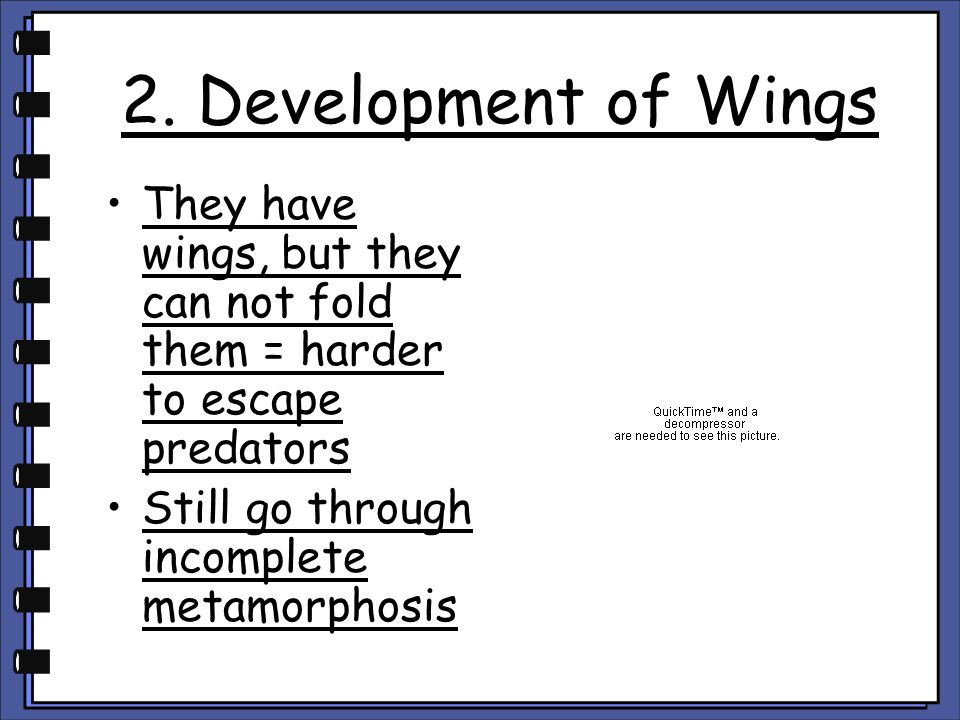 2. Development of Wings They have wings, but they can not fold them = harder to escape predators.