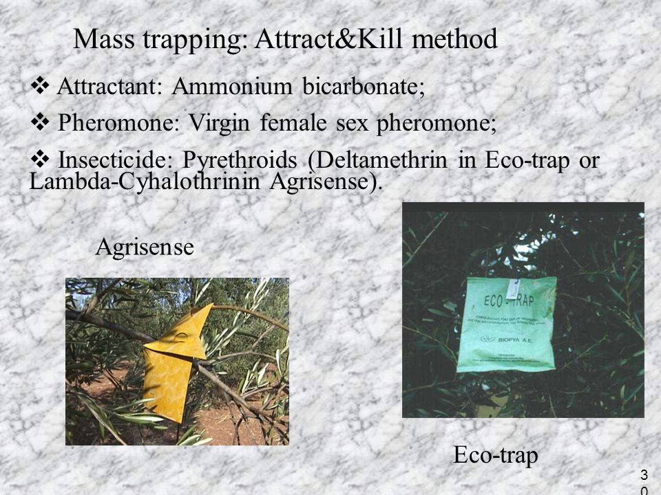 Mass trapping: Attract&Kill method