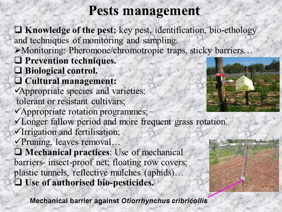 Pests management Knowledge of the pest: key pest, identification, bio-ethology and techniques of monitoring and sampling.