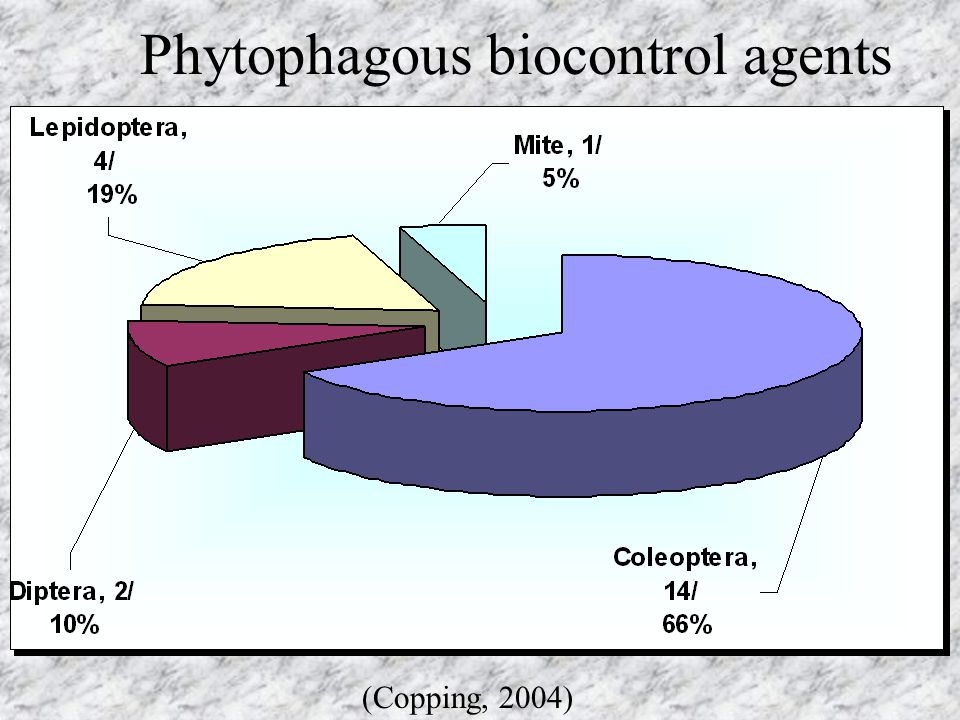 Phytophagous biocontrol agents
