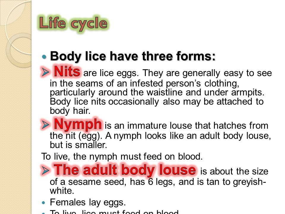 Life cycle Body lice have three forms: