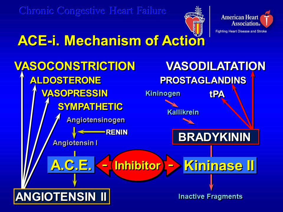 ACE-i. Mechanism of Action