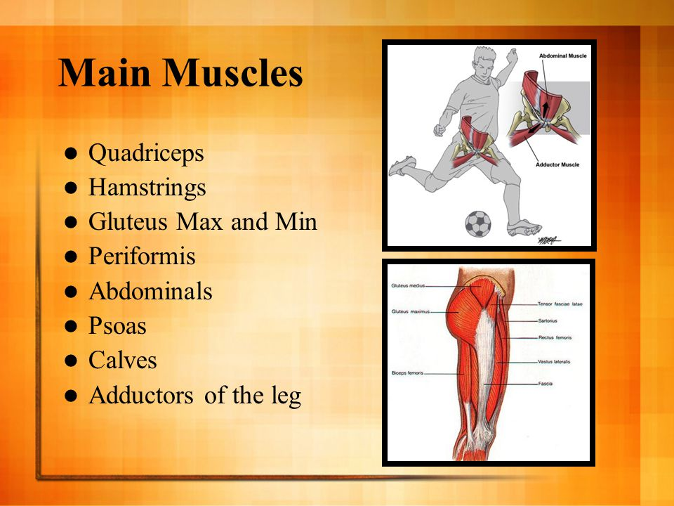 Main Muscles Quadriceps Hamstrings Gluteus Max and Min Periformis