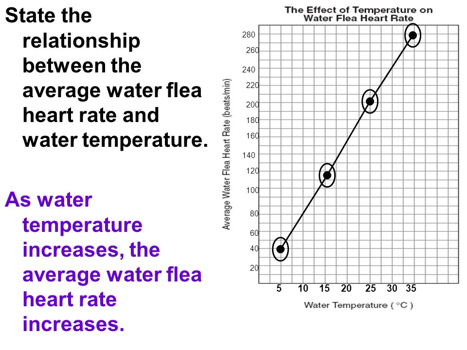 State the relationship between the average water flea heart rate and water temperature.