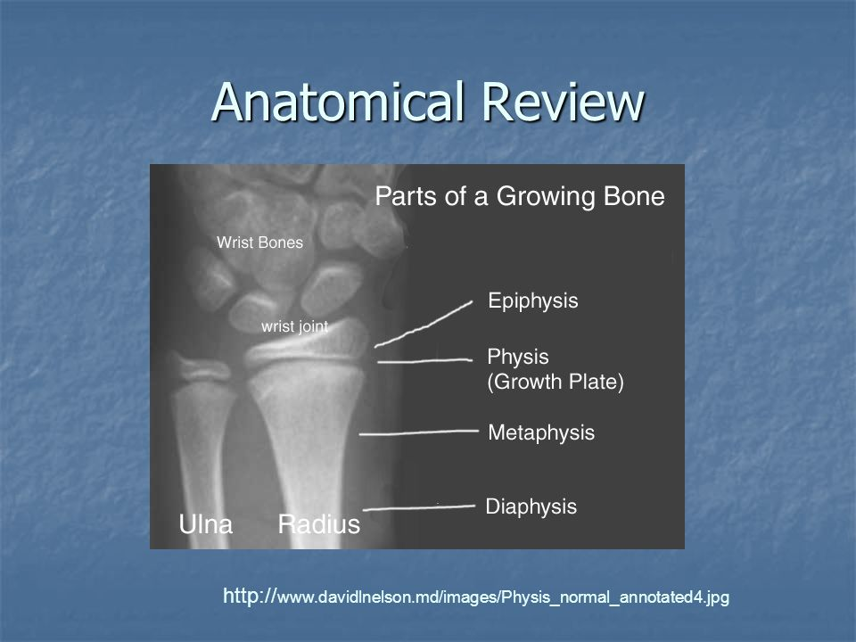 Anatomical Review http://www.davidlnelson.md/images/Physis_normal_annotated4.jpg