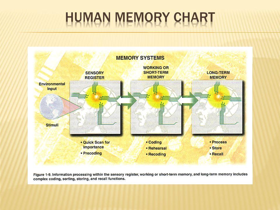 Human memory chart