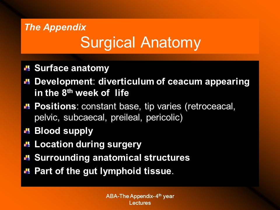 The Appendix Surgical Anatomy