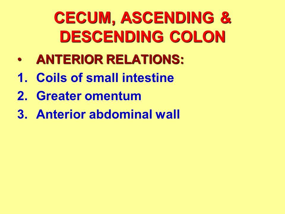 CECUM, ASCENDING & DESCENDING COLON