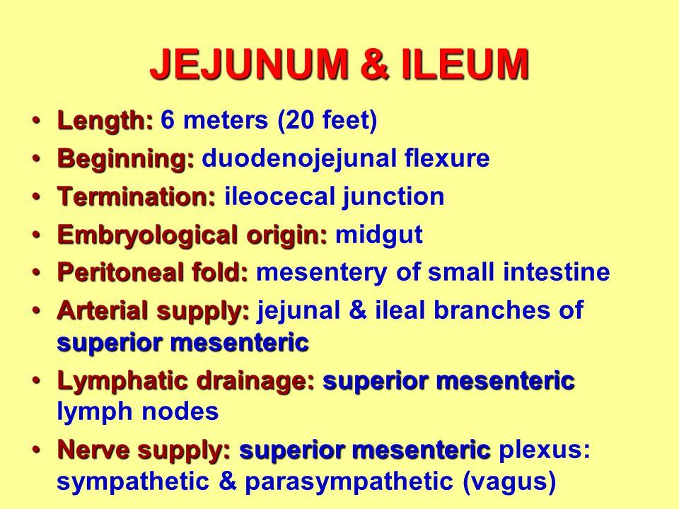 JEJUNUM & ILEUM Length: 6 meters (20 feet)
