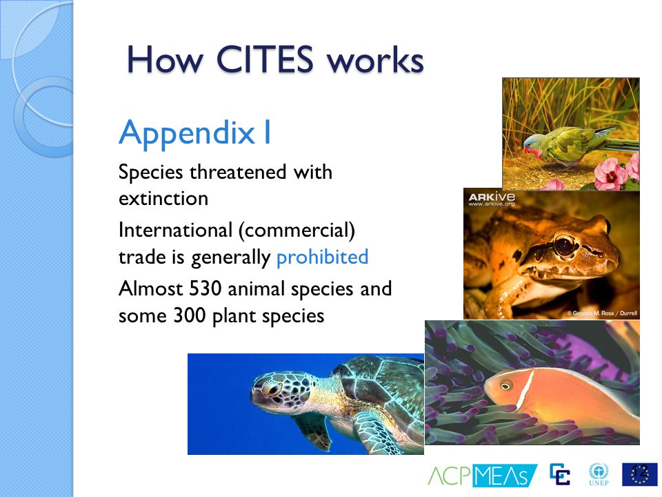 How CITES works Appendix I Species threatened with extinction