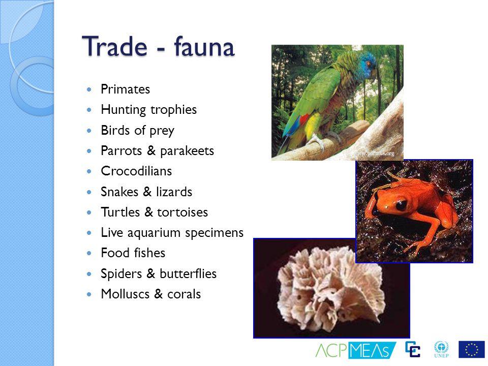 Trade - fauna Primates Hunting trophies Birds of prey