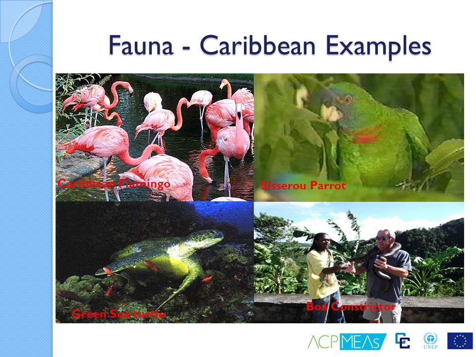 Fauna - Caribbean Examples