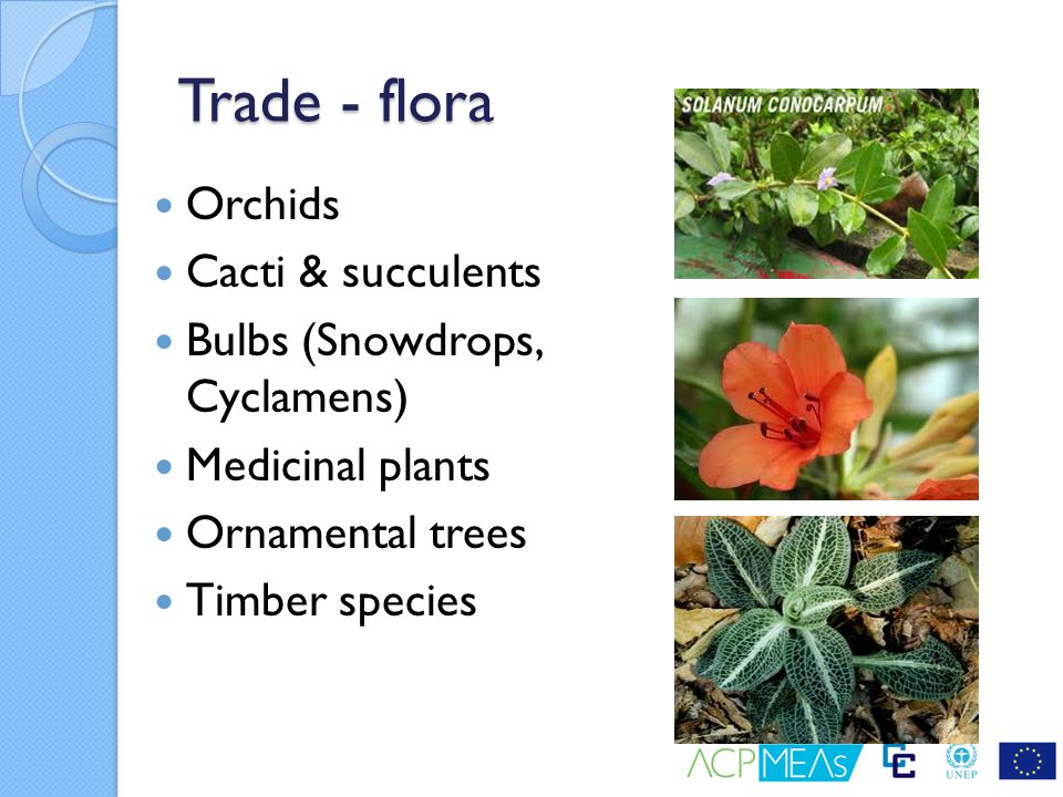 Trade - flora Orchids Cacti & succulents Bulbs (Snowdrops, Cyclamens)