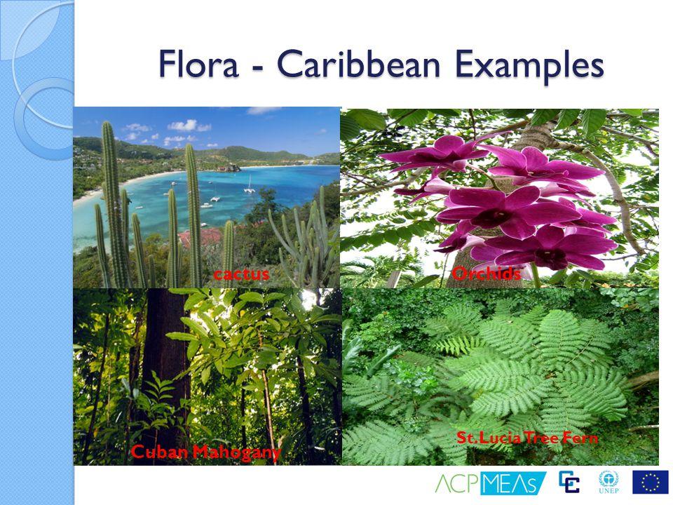 Flora - Caribbean Examples