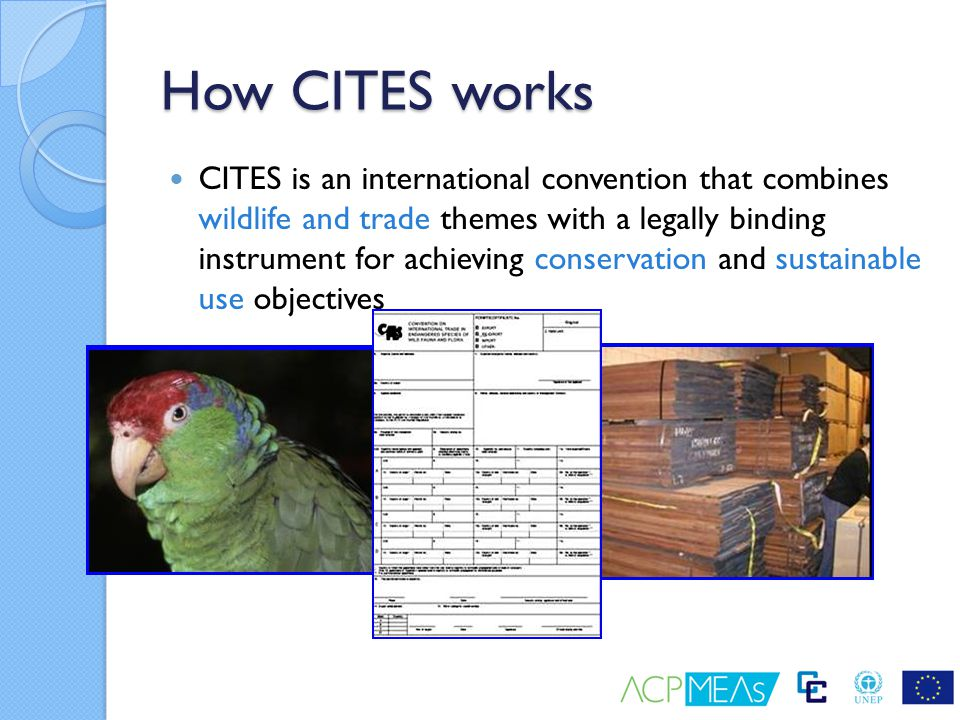 How CITES works