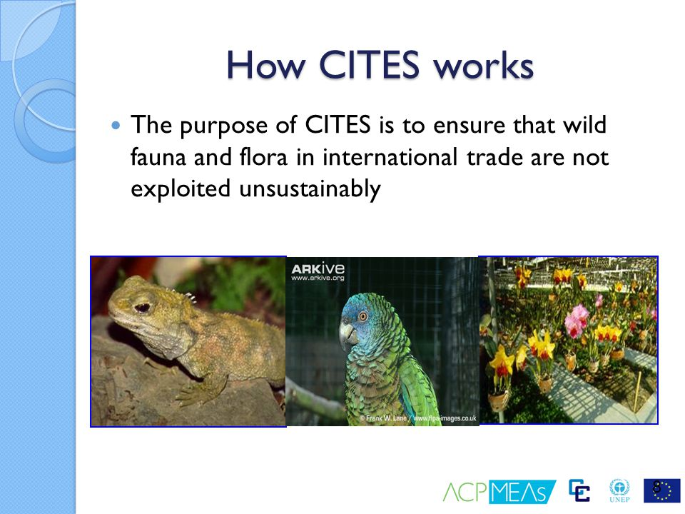 How CITES works The purpose of CITES is to ensure that wild fauna and flora in international trade are not exploited unsustainably.