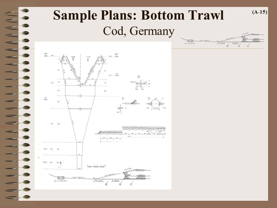 Sample Plans: Bottom Trawl Cod, Germany