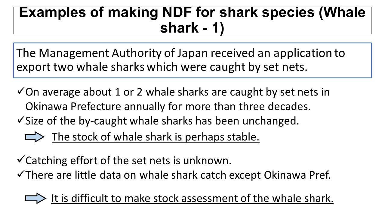 Examples of making NDF for shark species (Whale shark - 1)