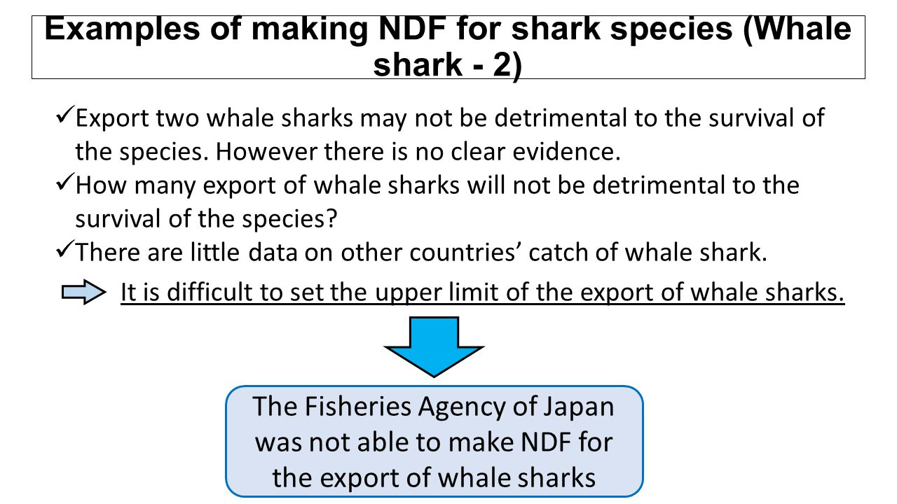 Examples of making NDF for shark species (Whale shark - 2)