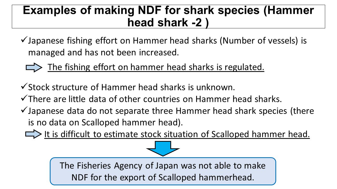 Examples of making NDF for shark species (Hammer head shark -2 )