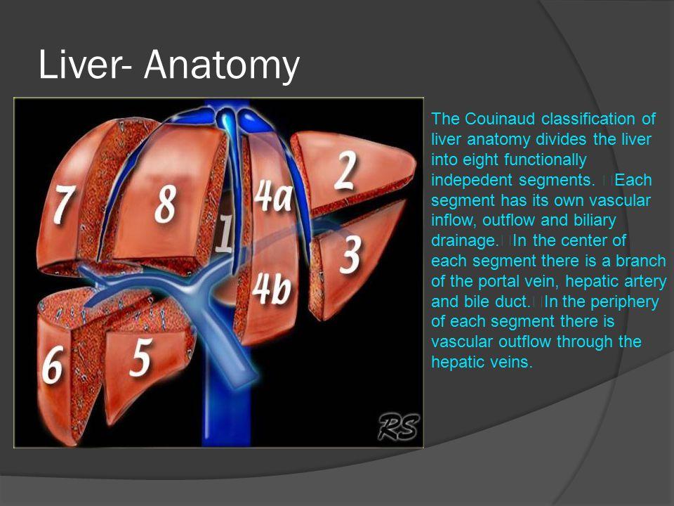 Liver- Anatomy