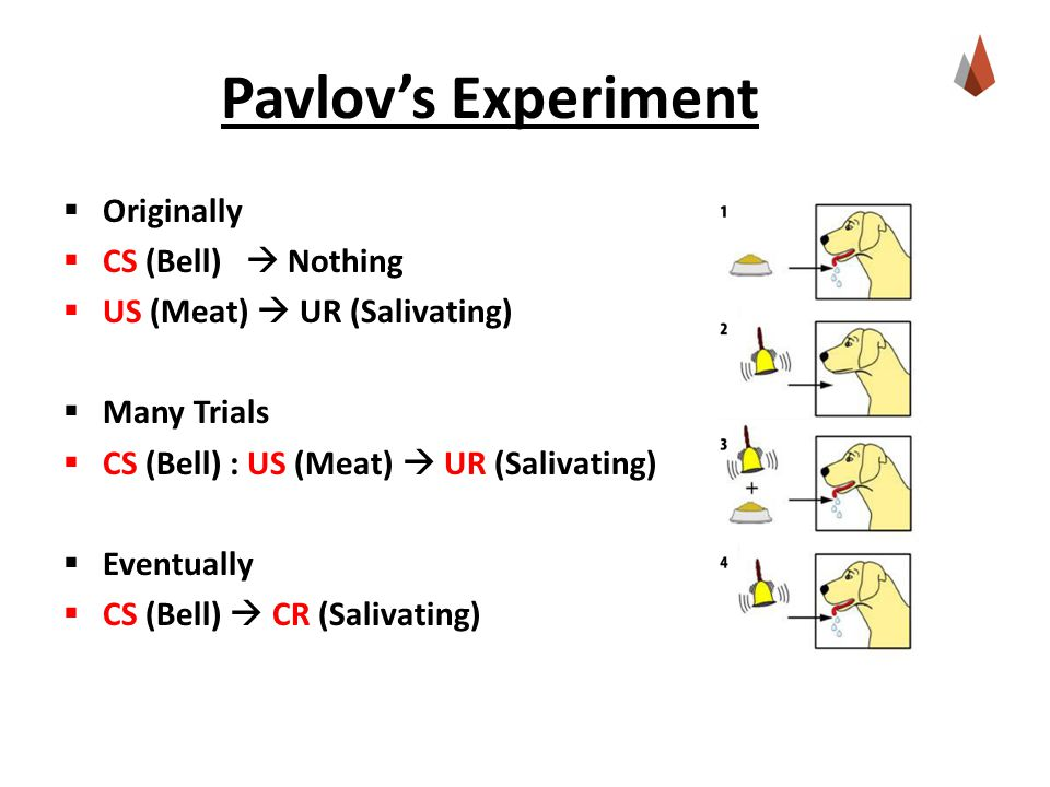 Pavlov's Experiment Originally CS (Bell)  Nothing
