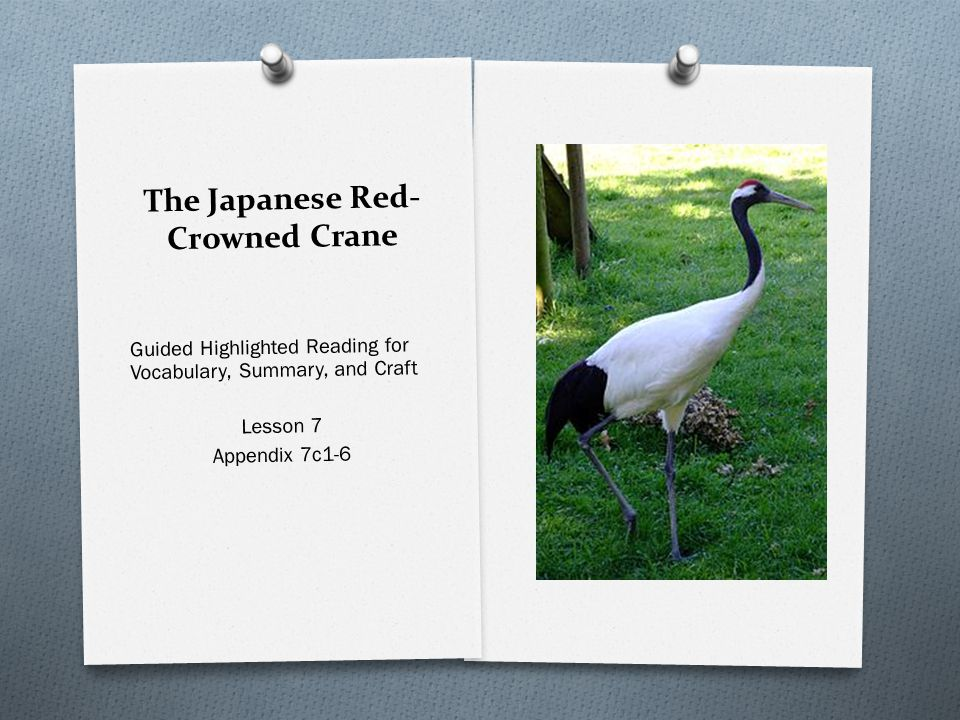 The Japanese Red-Crowned Crane