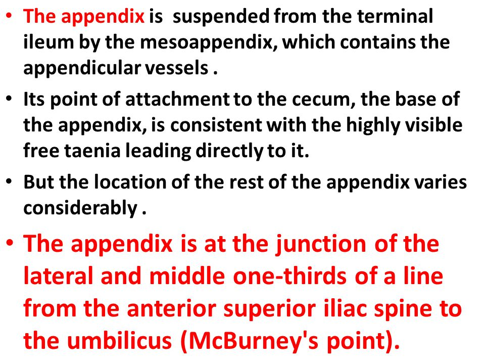 The appendix is suspended from the terminal ileum by the mesoappendix, which contains the appendicular vessels .