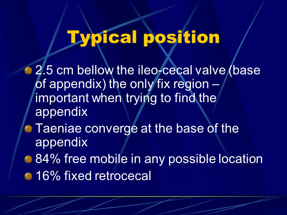 Typical position 2.5 cm bellow the ileo-cecal valve (base of appendix) the only fix region – important when trying to find the appendix.