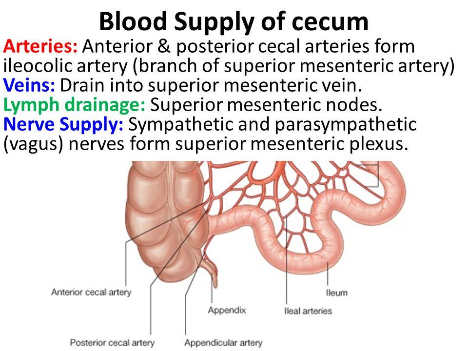 Blood Supply of cecum