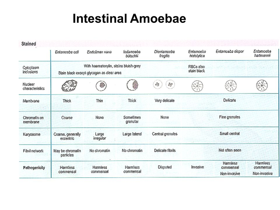 Intestinal Amoebae