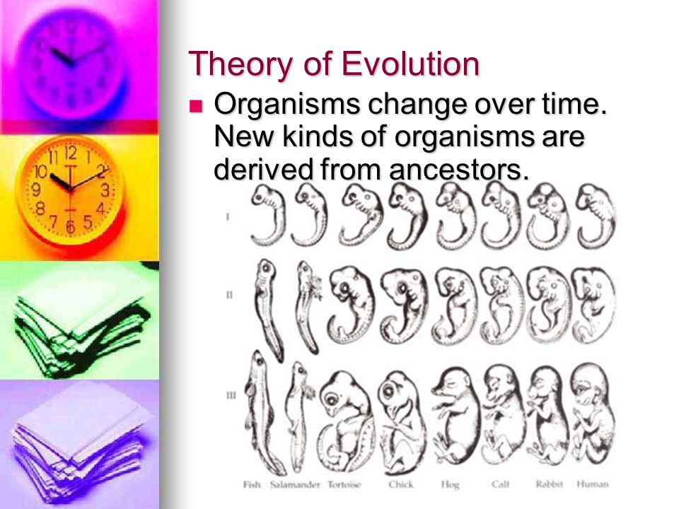Theory of Evolution Organisms change over time. New kinds of organisms are derived from ancestors.