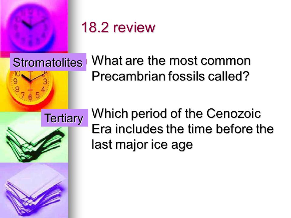 18.2 review What are the most common Precambrian fossils called