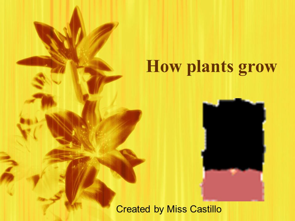 How plants grow Created by Miss Castillo
