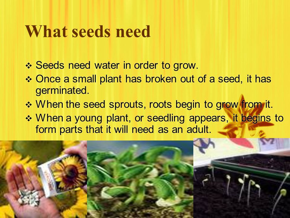 What seeds need Seeds need water in order to grow.